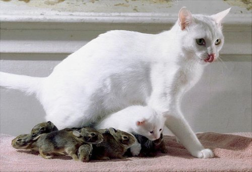 Дружба животных. Прикольные фото
