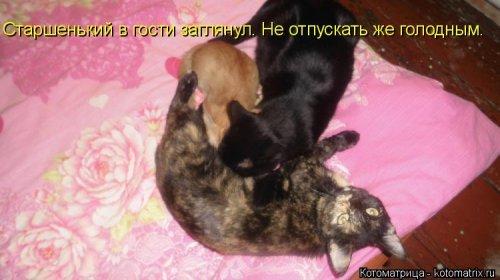 Новая прикольная котоматрица