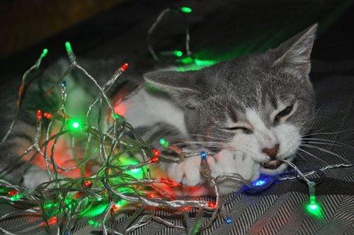 Разрушители новогодних ёлок. Прикольные кошки