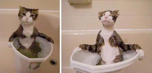 Кошки и вода. Смешные фотографии