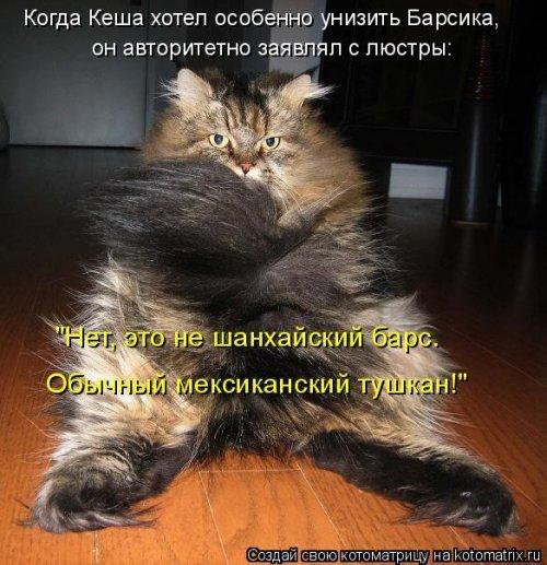 Весёлые котоматрицы для настроения. Картинки с надписями