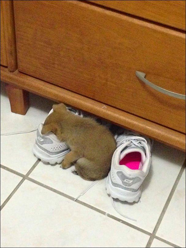 Пора вздремнуть! Приколы про спящих животных