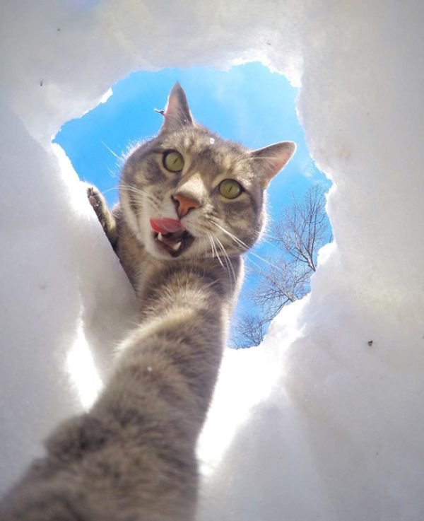 Умный селфи-кот. Смешной котэ