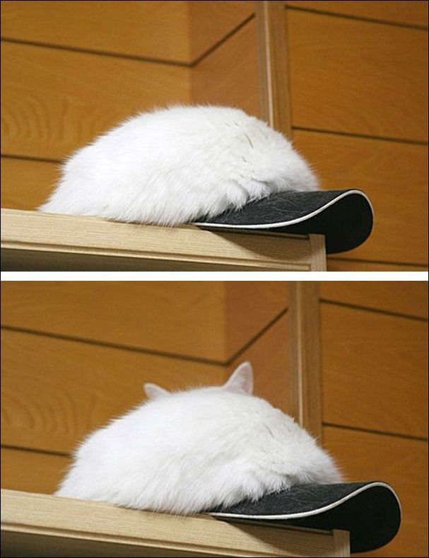 Коты прячутся. Прикольные фото