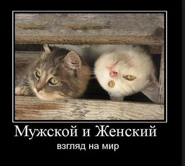 Забавные русские демотиваторы. Весёлые картинки
