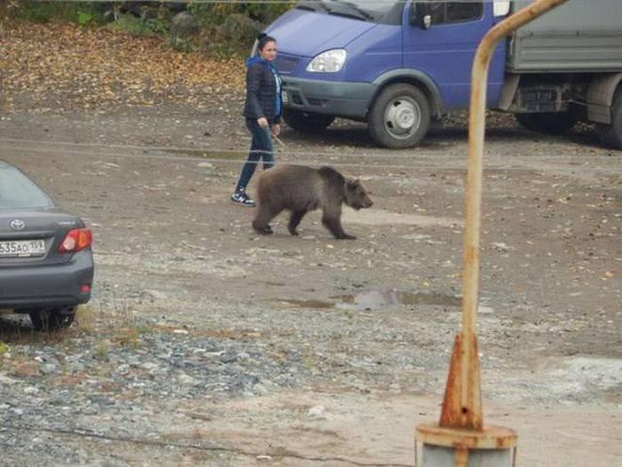Такое бывает только в России... Прикольные фотографии