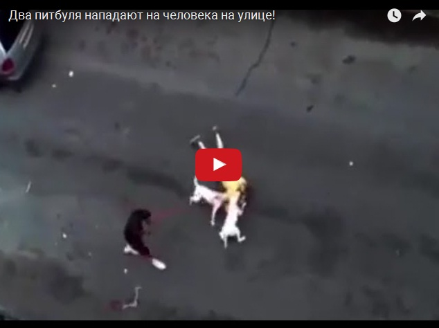 Две бойцовых собаки напали на человека