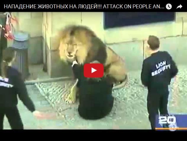 Видео нападений животных на людей