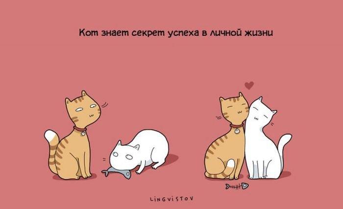 О жизни с кошкой. Смешные картинки про питомцев