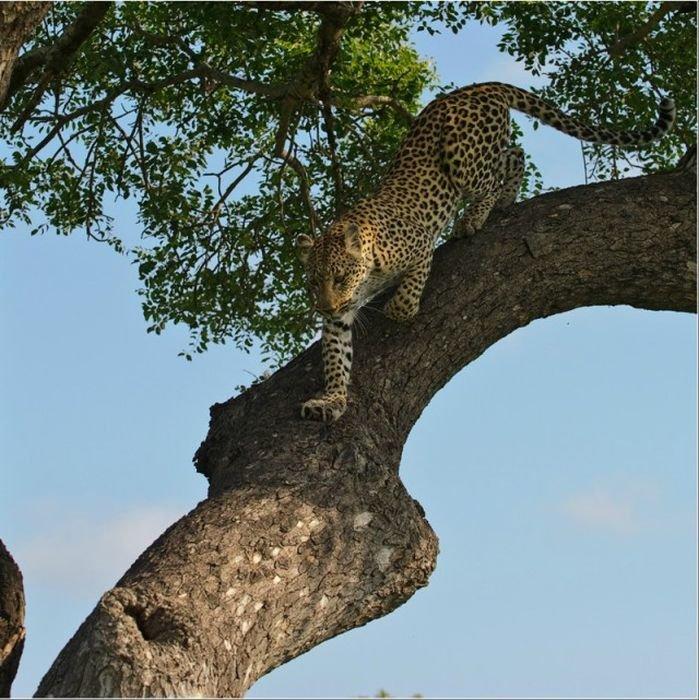 Красивые фотографии дикой природы от Сергея Горшкова