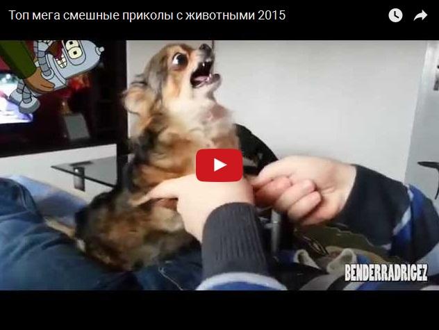 Самые смешные приколы с животными на видео