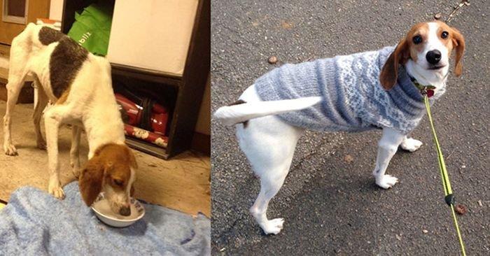 Из приюта в дом: дом и после. Про животных