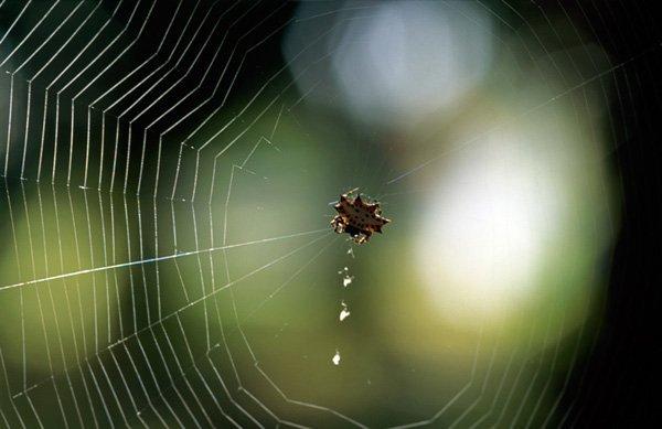 Узоры природы. Красивые картинки