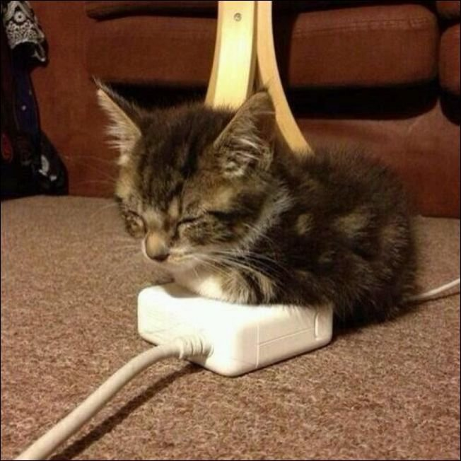 Животные хотят тепла. Умилительный пост