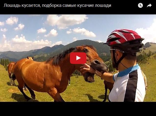 Лошади тоже кусаются