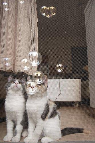 Прикольная фотосессия двух котят. Смешные котейки