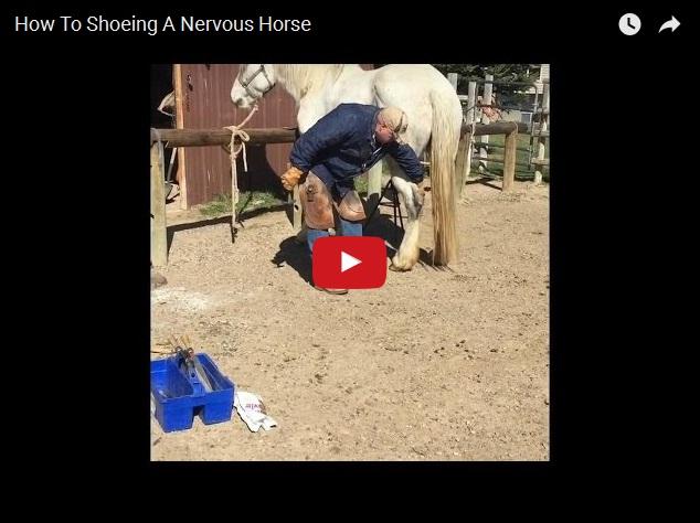 Как при помощи скотча подковать несговорчивую лошадь