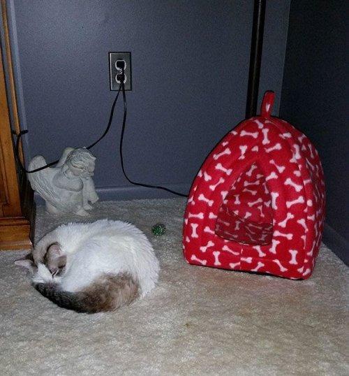 Кошачья логика. Приколы про кошек