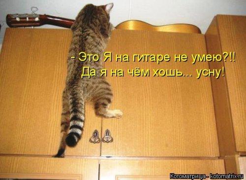 Подборка котоматриц. Приколы про кошек