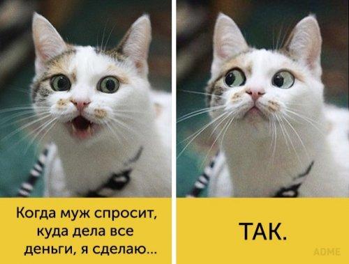 Весёлые картинки про домашних кошек. Убойная подборка