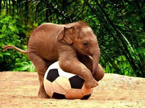 Спортивные животные. Прикольные фото