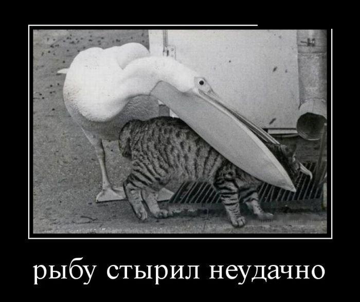 Русские демотиваторы. Весёлая подборка приколов