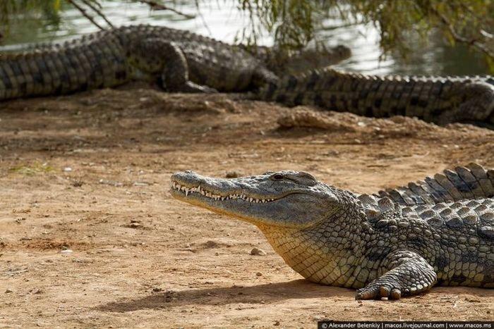 Заброшенный питомник с крокодилами в Израиле