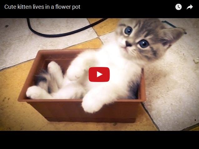 Видео про самого милого домашнего котенка