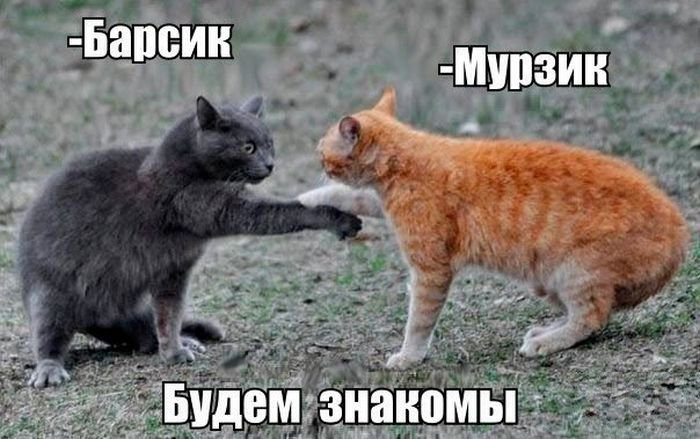http://xaxa-net.ru/uploads/posts/2016-04/1460896644_14-smeshnaya-podborka_xaxa-net.ru.jpg