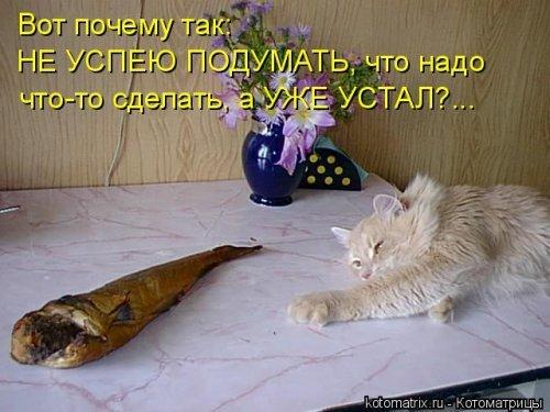 Самые прикольные котоматрицы