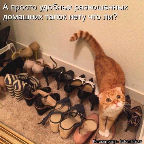 http://xaxa-net.ru/uploads/posts/2016-04/1461491729_svezhie-kotomatricy-15_xaxa-net.ru.jpg