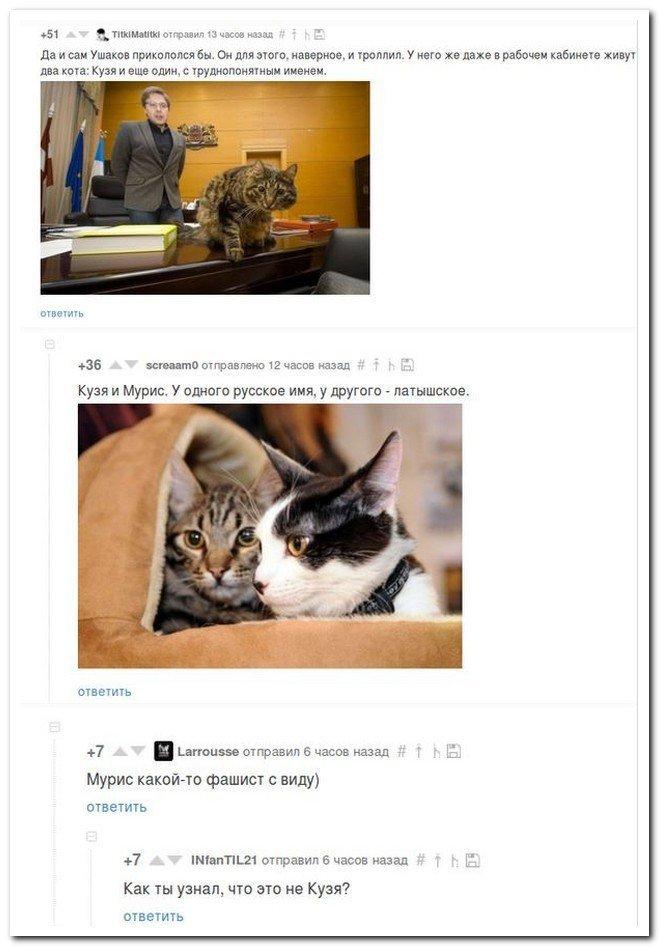 Прикольные скриншоты из социальных сетей