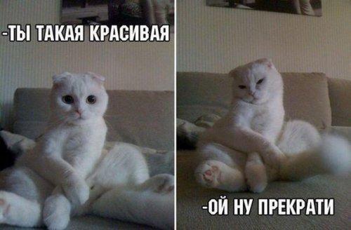 Смешные приколы про кошек. Весёлая подборка