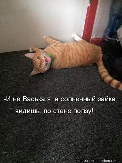 Свежие приколы про кошек. Прикольные усатые-полосатые