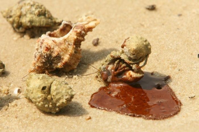 Ужасающие последствия разлива нефти в Мексиканском заливе