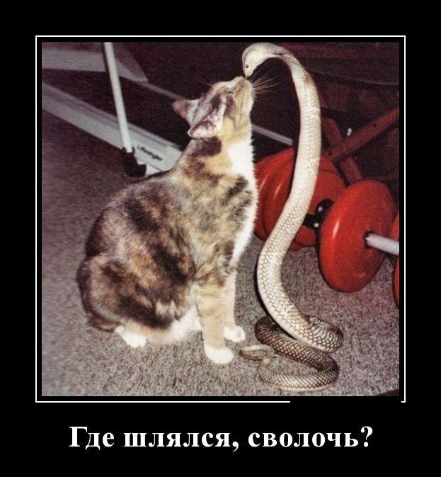 Настоящие русские демотиваторы. Подборка приколов