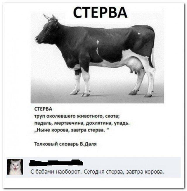 Скриншоты из социальных сетей. Приколы из Интернета