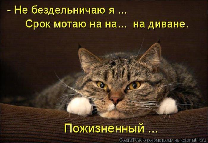 Весёлые котоматрицы для настроения. Прикольная подборка