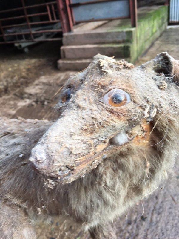 Неудачные чучела животных. Смешные картинки
