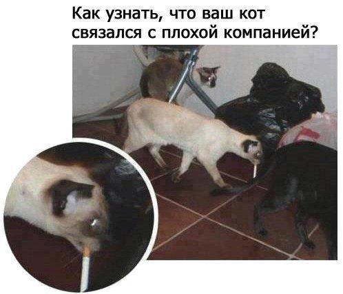 Прикольные картинки про кошек. Весёлые питомцы
