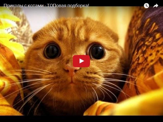 Прикольная подборка видео с котами