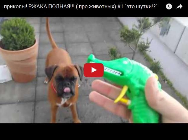 Подборка ржачного видео про животных