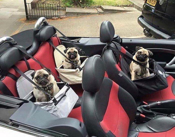 Автомобильные приколы для настроения. Смешные картинки