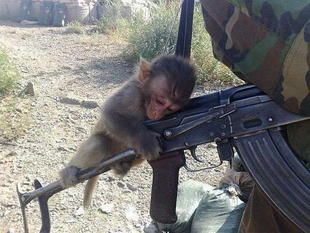 Такие милые и опасные животные