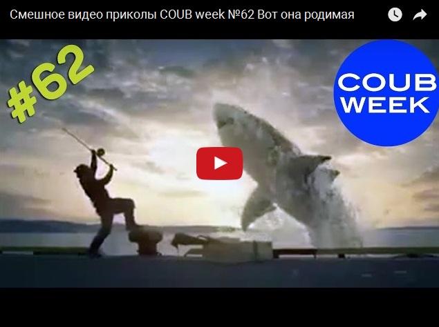 Самые смешные видео приколы из Coub