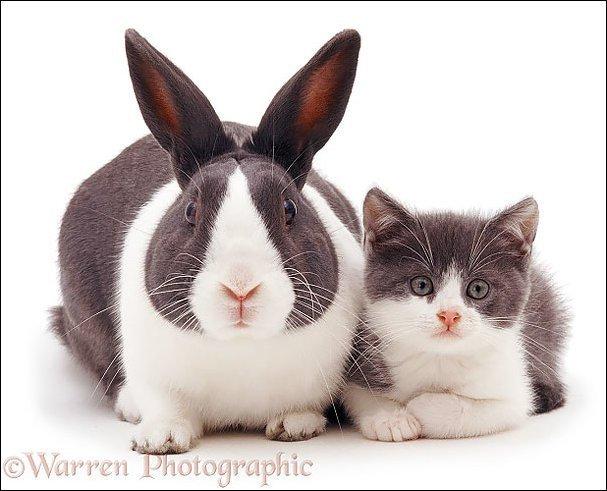 Животные с одинаковым окрасом. Прикольные фото наших питомцев