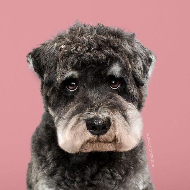 Прикольные стрижки у собак: до и после