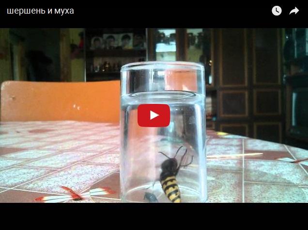 Муха против шершня