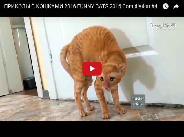 Прикольное видео про котов
