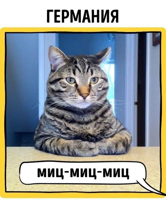 Как зовут кошек в разных уголках планеты. Смешные коты